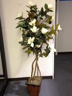 Magnolia tree 6 39 ivory indoor plants for Home decor kenner